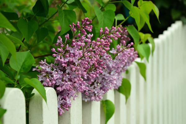 Recintare giardino spendendo poco, cosa sapere