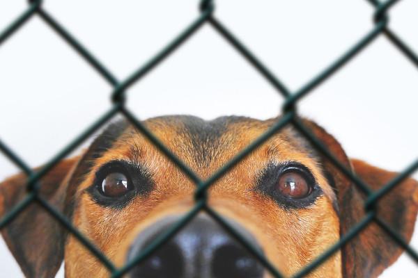 Recinzioni per cani che scappano