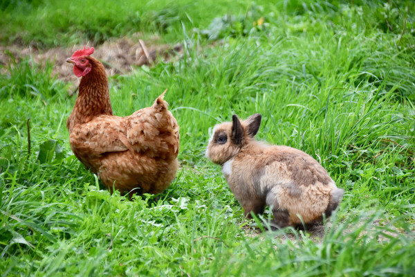 Recinti per animali da cortile, caratteristiche