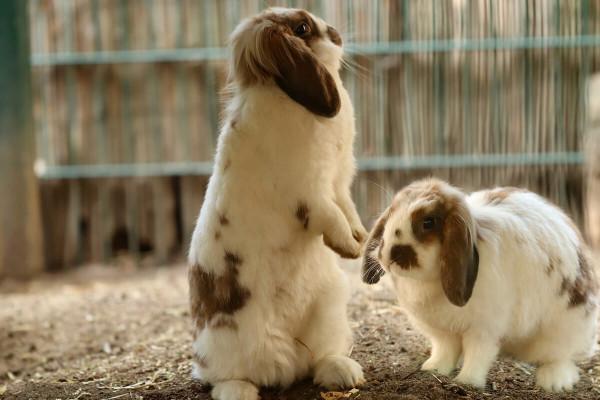 Recinti per conigli, caratteristiche