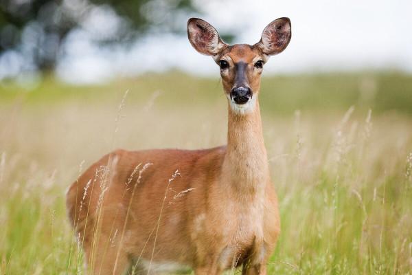 Recinzioni contro animali selvatici, perché installarle
