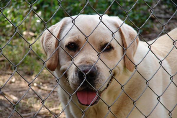 Recinzioni per cani da esterno, cosa sapere